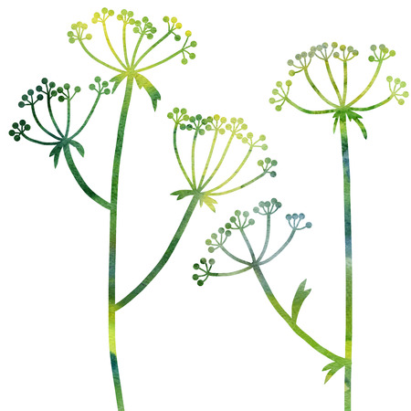dill: green dill plants drawing in watercolor, floral composition with wild plants, drawing floral card, watercolor artistic background, hand drawn  illustration
