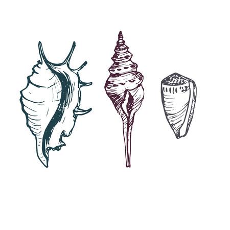 clam illustration: set of ink drawing shells and starfish, hand drawn illustration