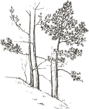 pine forest: pine trees and grass at hill drawing by ink, sketch of wild nature, forest sketch, hand drawn illustration Illustration