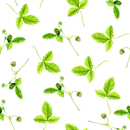 wild strawberry: Seamless pattern with watercolor drawing wild strawberry plants with leaves,flowers and berries, background with painted wild herbs, botanical illustration in vintage style, floral ornament