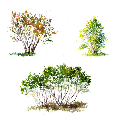 shrubs: set of green bushes drawing by watercolor, aquarelle sketch of spring shrubs, painting garden trees, hand drawn art background