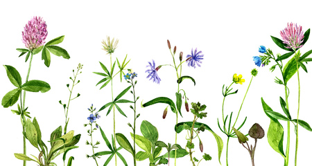herbal background: background with watercolor drawing wild flowers, painted field plants, herbal border,botanical illustration in vintage style, color floral template