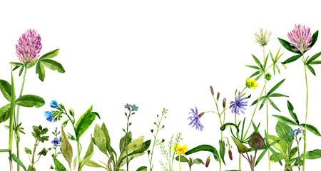 background with watercolor drawing wild flowers, painted field plants, herbal border,botanical illustration in vintage style, color floral template Zdjęcie Seryjne - 61969100