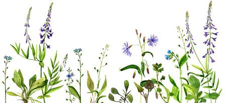achtergrond met aquarel tekening wilde bloemen, geschilderd veld planten, kruiden grens, botanische illustratie in vintage stijl, kleur bloemenmalplaatje Stockfoto
