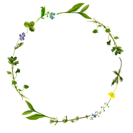 background with watercolor drawing wild flowers, round floral frame, wreath with painted field plants, herbal border,botanical illustration in vintage style, color natural template