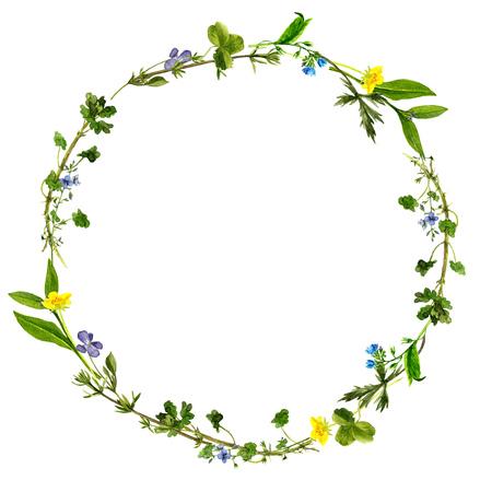 수채화 그린 필드 식물, 허브 테두리, 빈티지 스타일의 식물 그림, 색상 자연 템플릿으로 야생 꽃, 라운드 꽃 프레임, 화를 그리기 배경