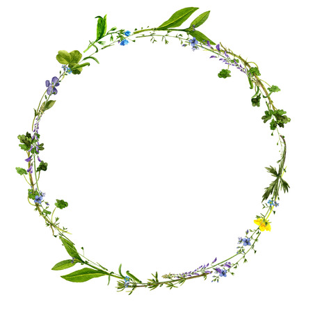 Fond d'aquarelle dessin fleurs sauvages, floral, cadre rond, couronne avec des plantes peintes sur le terrain, la frontière à base de plantes, illustration botanique dans le style vintage, couleur modèle naturel Banque d'images - 61969107