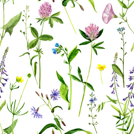 background with watercolor drawing wild flowers, seamless pattern with painted field plants, herbal ornament, botanical illustration in vintage style, color floral template