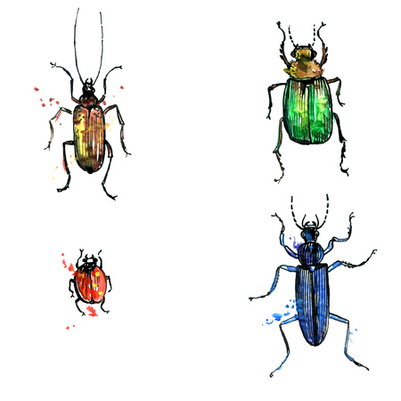 isolated beetles in different colors drawing by watercolor,hand drawn illustration