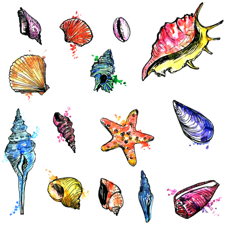 ink illustration: watercolor and ink drawing set of shells and starfish, hand drawn illustration, isolated nature objects