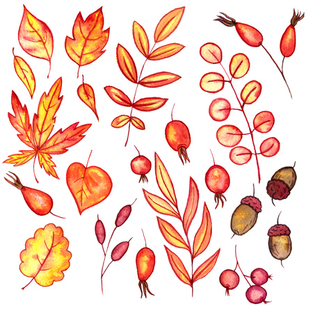 set of autumn watercolor leaves and berries, hand drawn design elements