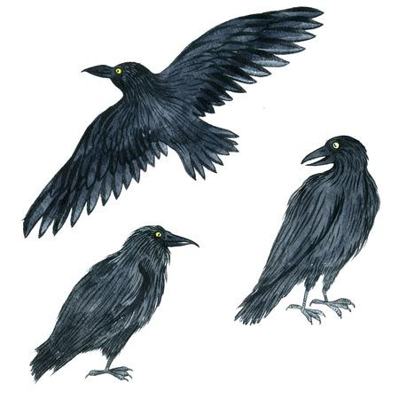Acuarela Cuervo Volando Negro, Dibujo Pájaro, Illusration Dibujado A ...
