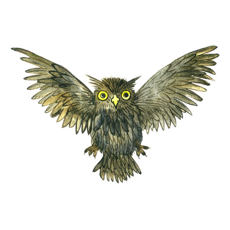 owl illustration: watercolor cartoon flying doodle owl, drawing bird isolated at white background, hand drawn illustrtion