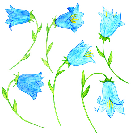 snowdrops: watercoolor drawing blue bellflowers isolated at white background, painting flowers, snowdrops, hand drawn illustration