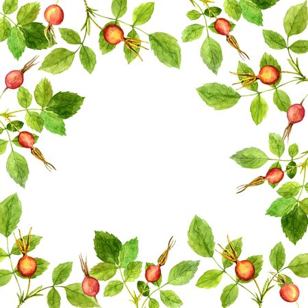 eglantine: floral frame with watercolor branches of briar with green leaves and orange and red berries, hand drawn illustration, painting summer background