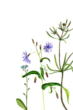 field flowers: background with watercolor drawing wild flowers, painted field plants, herbal border,botanical illustration in vintage style, color floral template