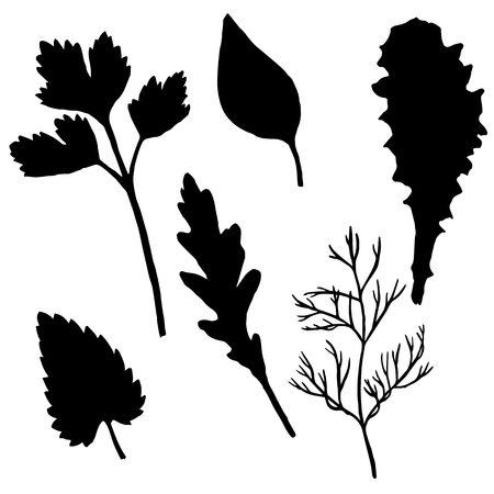 potherb: vector silhouettes of potherb, leaves of parsley and arugula,dill palnt, mint and basil, set for salad, hand drawn illusttration Illustration