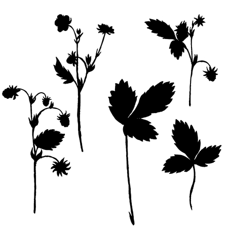 wild strawberry: Vector silhouettes of wild strawberry flowers and leaves , isolated wild plants, black monochrome floral elements