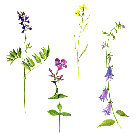 Set of watercolor drawing wild flowers and herbs, isolated painted plants, botanical illustration in vintage style, color floral elements, hand drawn natural image 写真素材