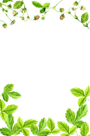 background with watercolor drawing wild flowers and berries, painted forest strawberries leaves, herbal border,botanical illustration in vintage style, color floral template
