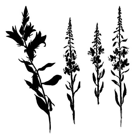 vector siluetas de las flores de alarma y las hierbas de sauce, plantas silvestres aisladas, monocromático negro elemento floral, dibujado a mano ilustración