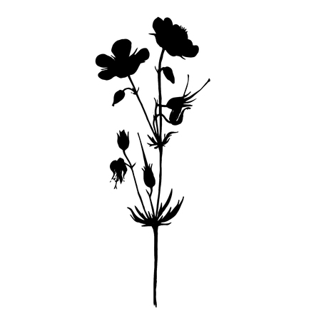 Vector silhouette of drawing wild flower, wild plant, isolated floral element, hand drawn illustration Illustration
