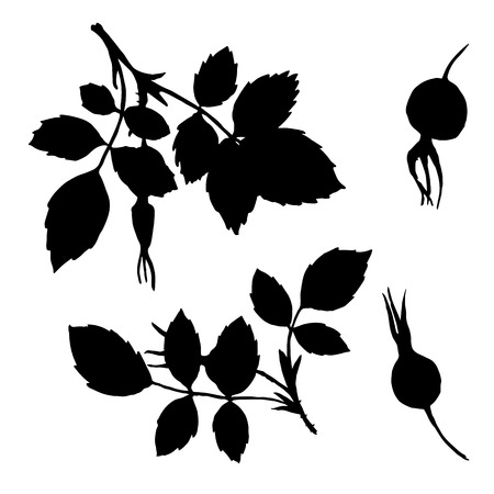 eglantine: isolated branches silhouettes of briar with leaves and berries, hand drawn illustration, vector black monochrome floral elements Illustration