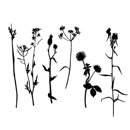 Vector conjunto de siluetas de flores silvestres y cereales hierbas, plantas silvestres aislados, elementos florales monocromo negro