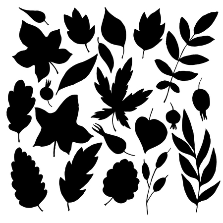 simplify: vector silhouettes of leaves and berries, hand drawn design elements