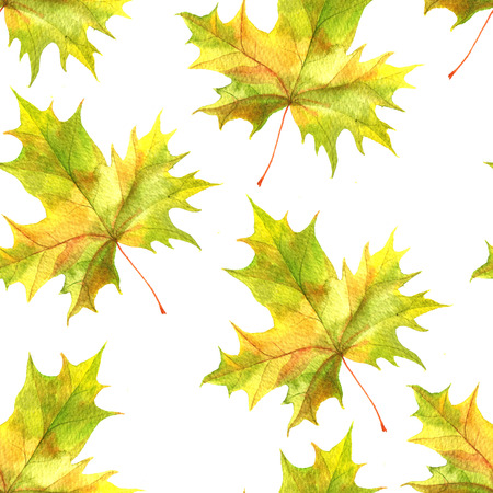 seamless patttern with realistic watercolor autumn leaves of maple tree, hand drawn nature background,floral ornament Stock Photo