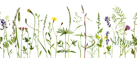 Gráfico de la acuarela flores silvestres y hierbas, frontera decorativa a base de hierbas, sin fisuras patrón con plantas silvestres pintado, ilustración botánica en el estilo vintage, fondo floral, dibujado a mano plantilla perfecta