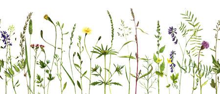 野生の花とハーブ、シームレスなハーブ罫線、パターン塗装野生植物と、ビンテージ スタイル、花の背景手描き自然なテンプレートでボタニカル イラストを描く水彩画