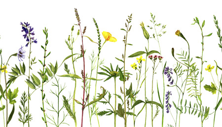 field flowers: Watercolor drawing wild flowers and herbs, seamless decorative herbal border, pattern with painted wild plants, botanical illustration in vintage style, floral background, hand drawn natural template