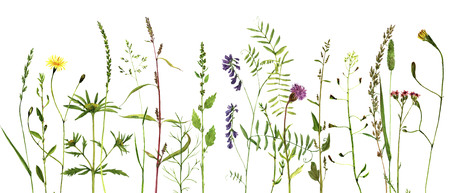 fields of flowers: Watercolor drawing wild flowers and herbs, painted wild plants, botanical illustration in vintage style, color floral background, hand drawn natural template, decorative herbal border Stock Photo