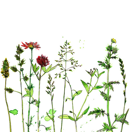 Background with watercolor and ink drawing wild flowers and herbs, painted field plants, color floral composition, hand drawn natural illustration