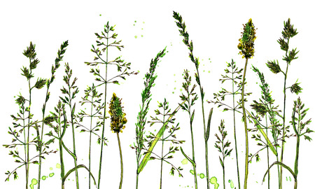 compostion: background with watercolor and ink drawing cereals and herbs, painted wild plants, color floral composition, hand drawn natural illustration