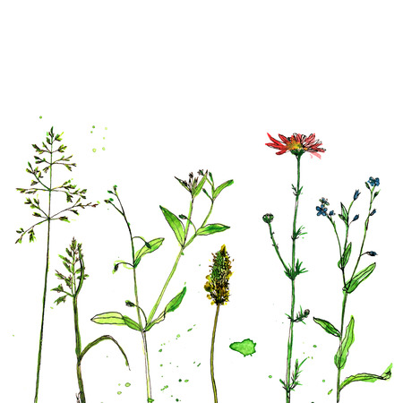 compostion: Background with watercolor and ink drawing wild flowers and herbs, painted field plants, color floral composition, hand drawn natural illustration