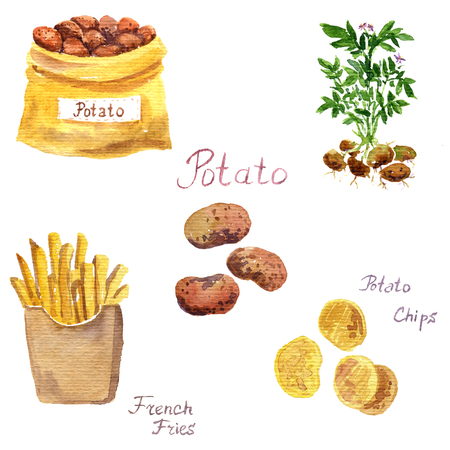 watercolor potato set, plant, vegetable,french fries and chips, hand drawn illustration Stock Photo
