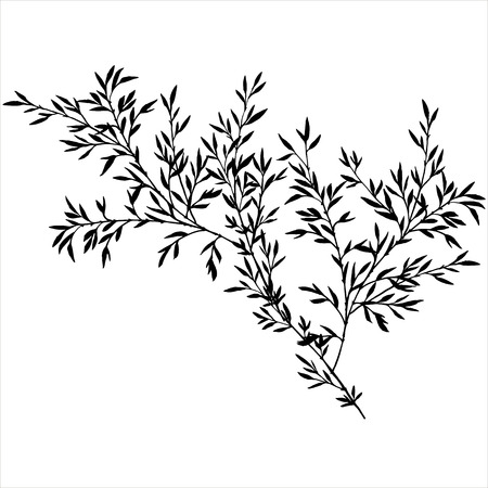 tree branches with leaves, bamboo shoots,isolated hand drawn vector element