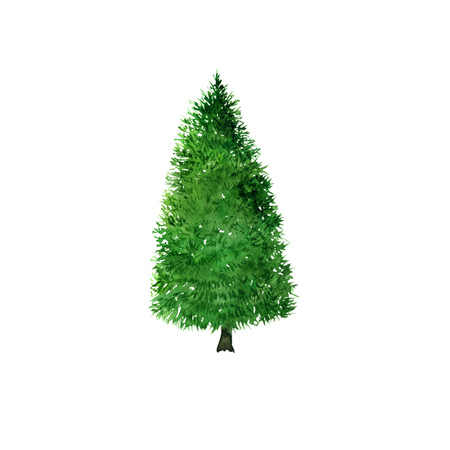 green fir tree drawing by watercolor, christmas and new year symbol, hand drawn illustration Stock Photo