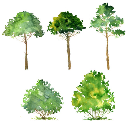 cicuta: set of trees drawing by watercolor, bushes and pines, green green foliage,isolated natural elements, hand drawn illustration Foto de archivo
