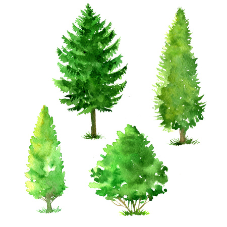 set of trees drawing by watercolor, conifers and deciduous, green foliage, isolated natural elements, hand drawn illustration