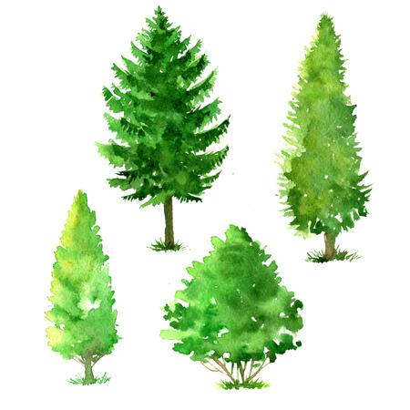 Set di alberi disegno di acquerelli, conifere e latifoglie, fogliame verde, isolata elementi naturali, disegnata a mano illustrazione