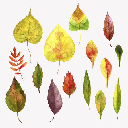 vector set of realistic autumn watercolor colorful leaves of trees, hand drawn isolated natural design elements Illustration