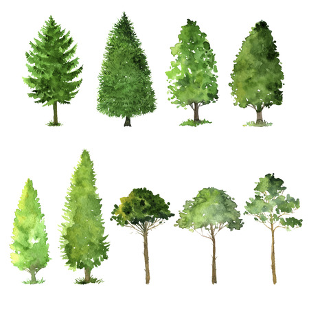set of trees drawing by watercolor, conifers and deciduous, green foliage, isolated natural elements, hand drawn illustration Vettoriali