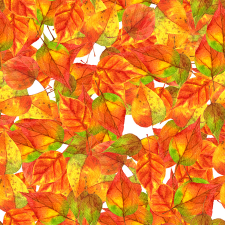 seamless pattern with realistic autumn watercolor multicolor leaves of tree, rainbow colors, hand drawn isolated design elements