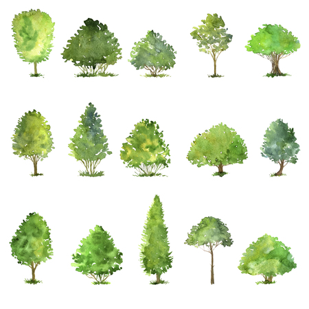 vector set of trees drawing by watercolor, bushes and decidious, green green foliage,isolated natural elements, hand drawn illustration Illustration