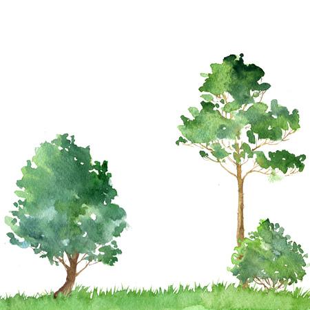 arboleda: paisaje de la acuarela con árboles de hoja caduca, pinos, arbustos y hierbas, resumen de antecedentes, la naturaleza plantilla de bosque, follaje verde y plantas, dibujado a mano ilustración