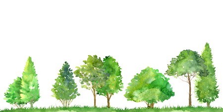 watercolor landscape with deciduous trees,pine and firs, bushes and grass, abstract nature background, forest template, green foliage and plants, hand drawn illustration