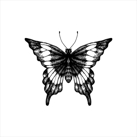 machaon, hand drawn butterfly, line drawing vector element
